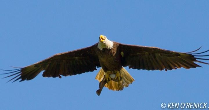 Loch Lloyd:  Where eagles fly