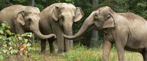 The Elephant Sanctuary elephants meeting
