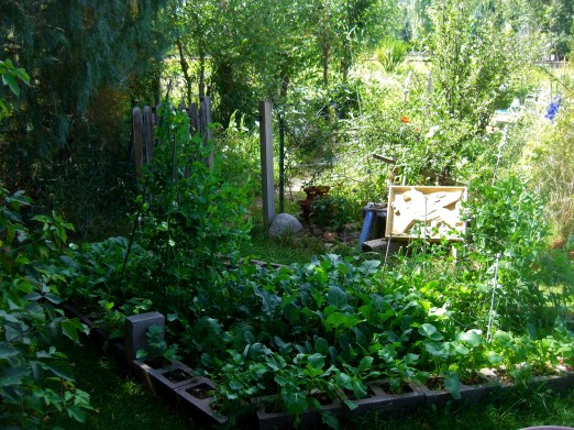 Kitchen Garden @ martincooney.com