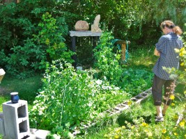 Kris Reviews the Kitchen Garden @ martincooney.com