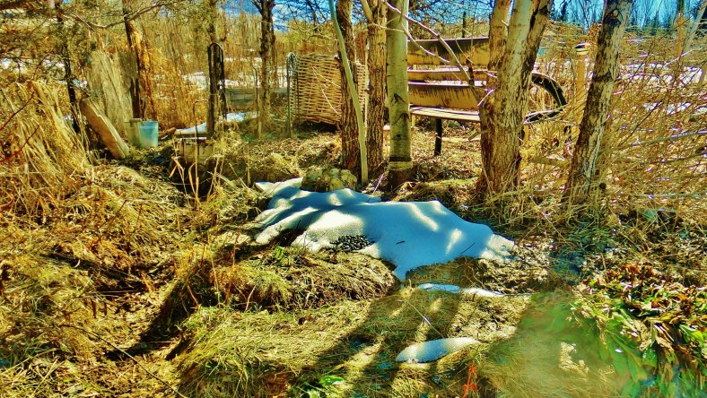 The Arbor, mid-February, 2015, Woody Creek, CO