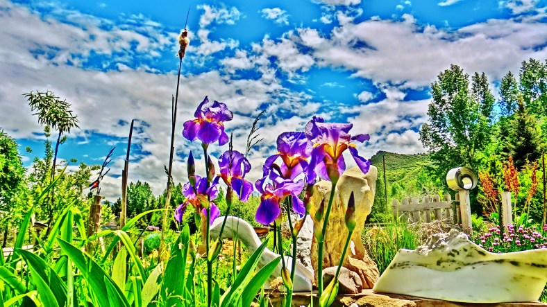 Flight of the Iris Bee, Woody Creek CO