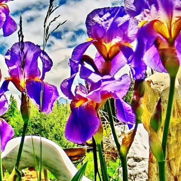 Flight of the Iris Bee, Pareidolia, Woody Creek CO