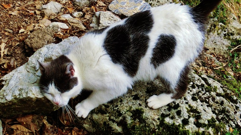 Abandoned Pet Cat, Trail Markers, Along the Path to Forte dei Marmi Hostel, The North West Tuscan Way