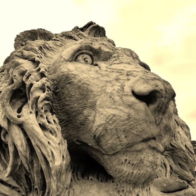 Massa Lions, The Curious One, Tuscany, Italy