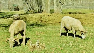 Avalanche Ranch farm animals, Crystal River Valley, Along The Aspen Marble Detour, Colorado, by Martin Cooney