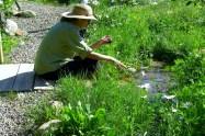 Kris Cooney, owner KMJC GALLERY, Aspen CO, enjoys her garden in Woody Creek