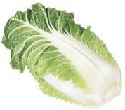 Chou pour la  Salade de chou Nappa