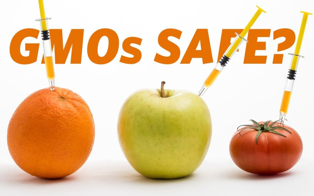 IS GMO SAFE FOR YOU?