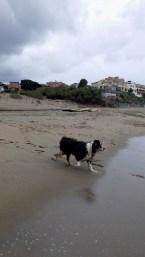 dogsofsanfrancisco24