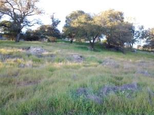 Tulocay Cemetery in Napa