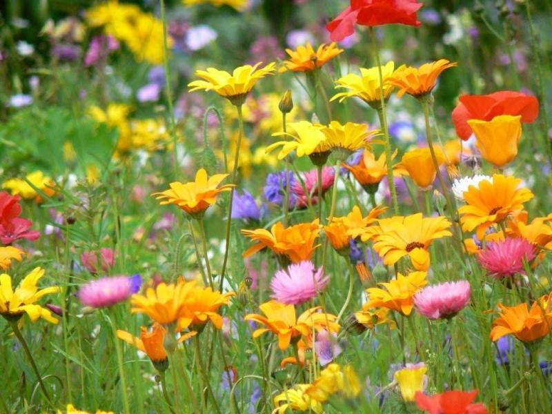 fleurs-comestibles.jpg