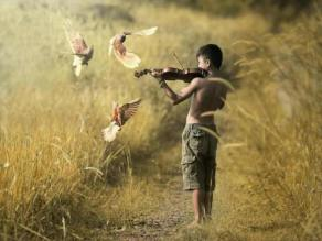 music-violin-player-nature-photo-picture-images 2.jpg