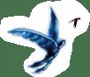 Homme oiseau et Hirondelle