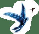 Homme oiseau et Hirondelle.png