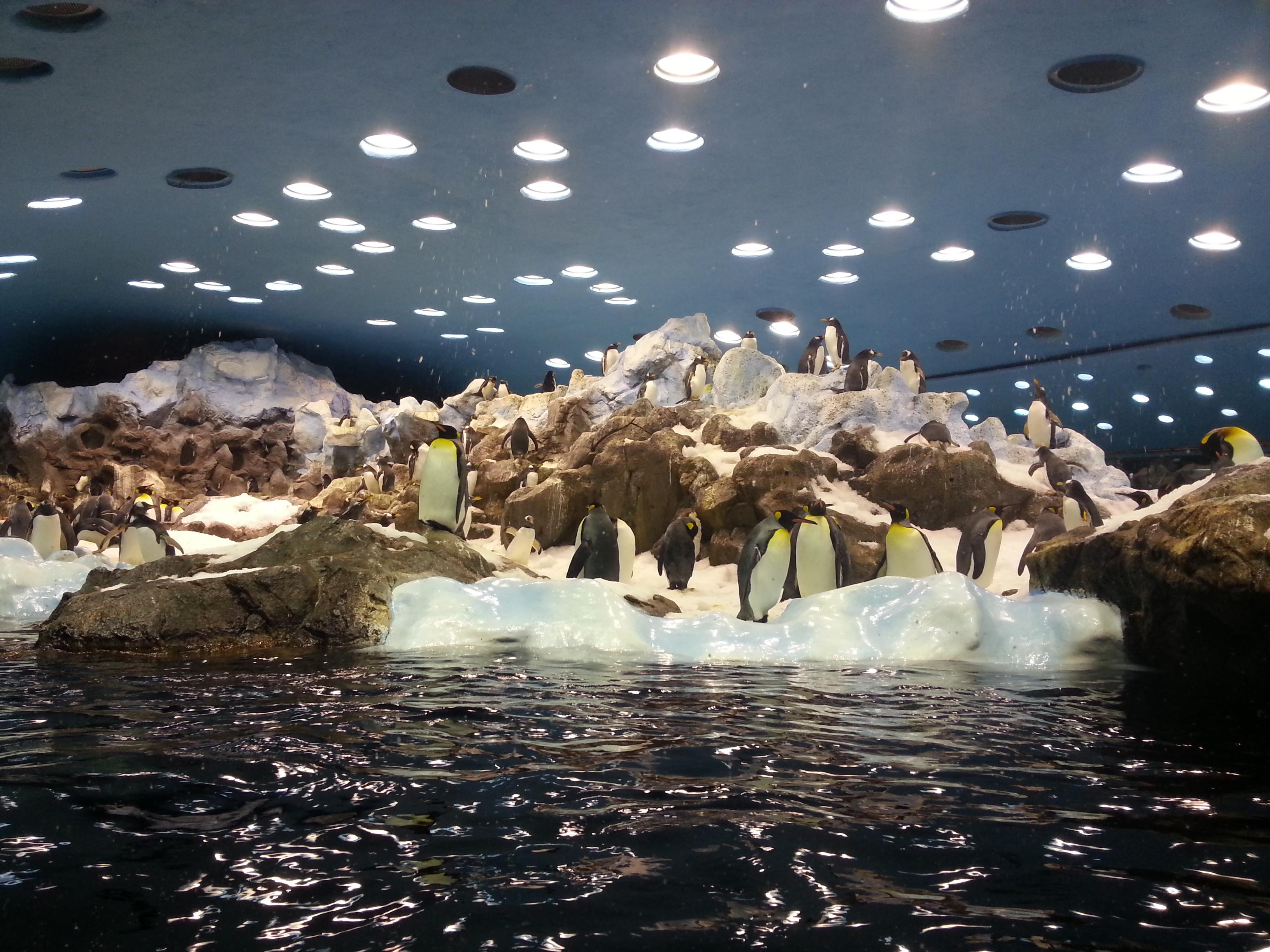 Loro Parque - palác tučňáků