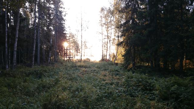 Snart kommer hösten