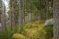 Skogen vi nyttjade