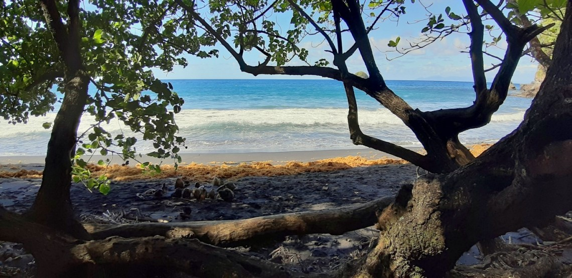 Anse Céron, Prêcheur, Martinica - le spiagge più belle