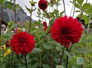 Ein paar Blumen vom Garten meiner Mutter