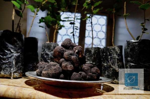 Schwarzer Périgot-Trüffel mit Bäumen