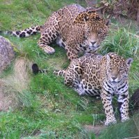Chester Zoo Review - Visitor Guide, Tips and What to See