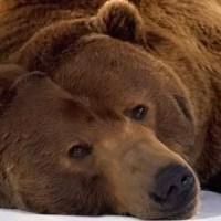 În plină noapte, un urs apare din pădure, în calea unui mitropolit ortodox