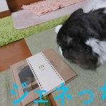 新生活とともに始めよう!連用日記