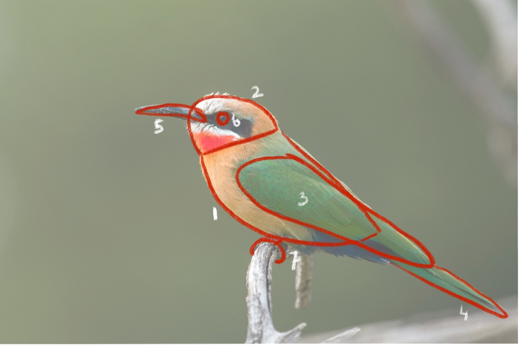 vogel met getekende vormen erover heen