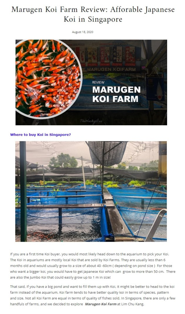 Marugen Koi Farm Article Review by Wacky Duo
