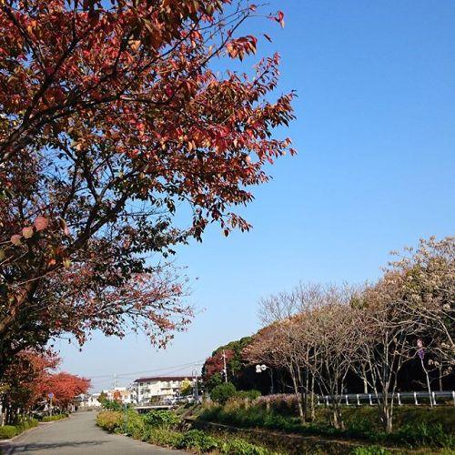 目の前に美しい紅葉。また春には一面桜色に。一年中美しい。なんだかとても有り難い。
