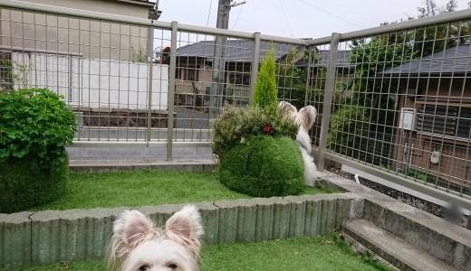 はじめまして!ミックス犬のエルルとマイロです。