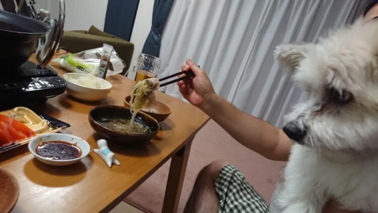人間のご飯を狙う犬
