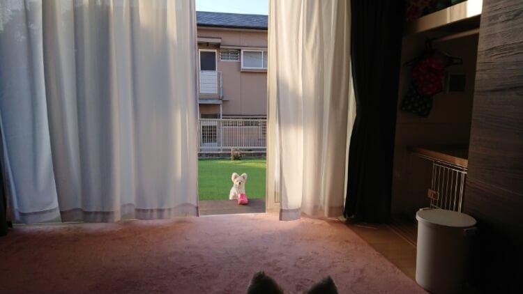 お庭から見つめるマイロ