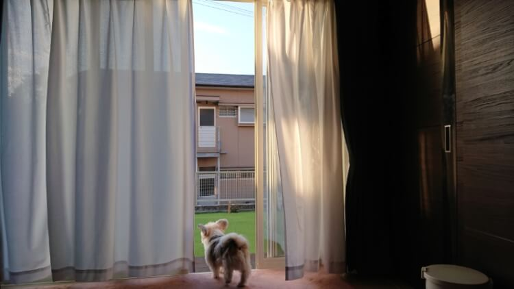 窓から出る犬