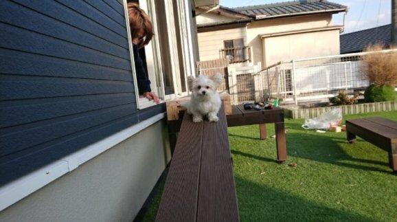 スロープの上で怖くて固まるミックス犬