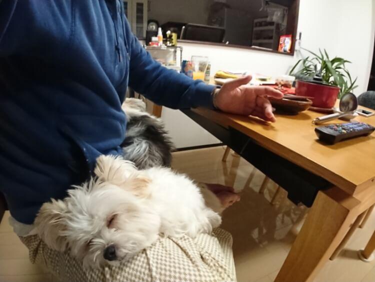 可愛い寝顔の実kk酢犬