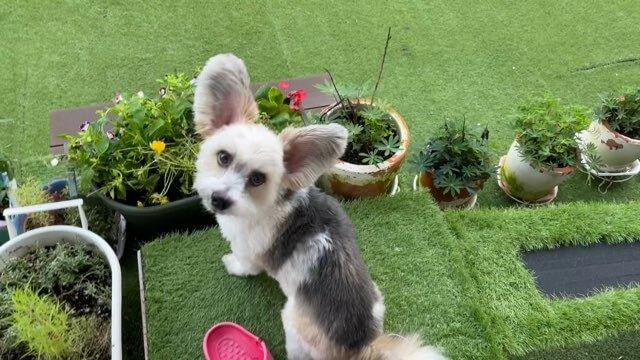 植木鉢の寄せ植えと犬