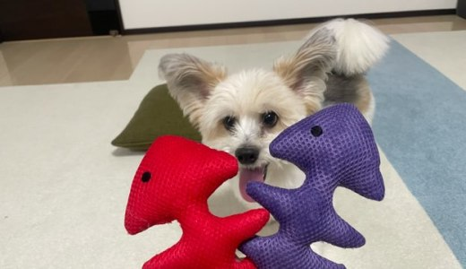 犬と引張っこするには最高ダイソーの音が鳴るペット用玩具サカナ型