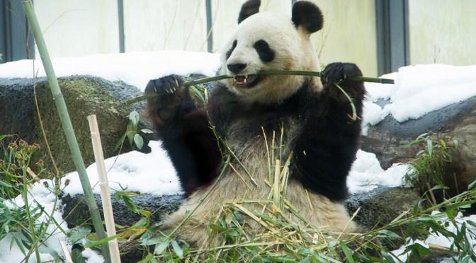 遠足気分で上野動物園 PART 1