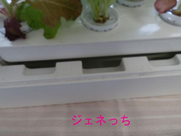 LEDプランター水耕栽培