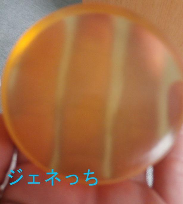 マヌカハニ石鹸指が透き通る