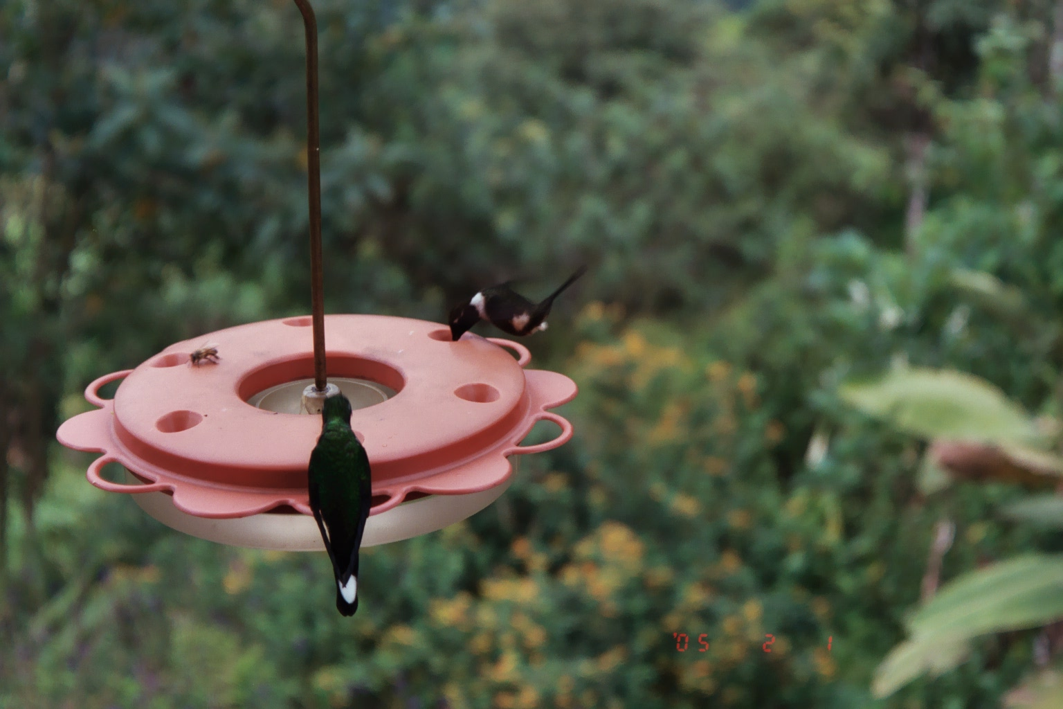 A couple other hummers