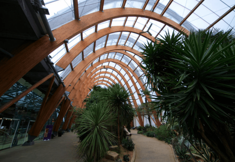 curved glulam members at Sheffield Winter Gardens U.K.