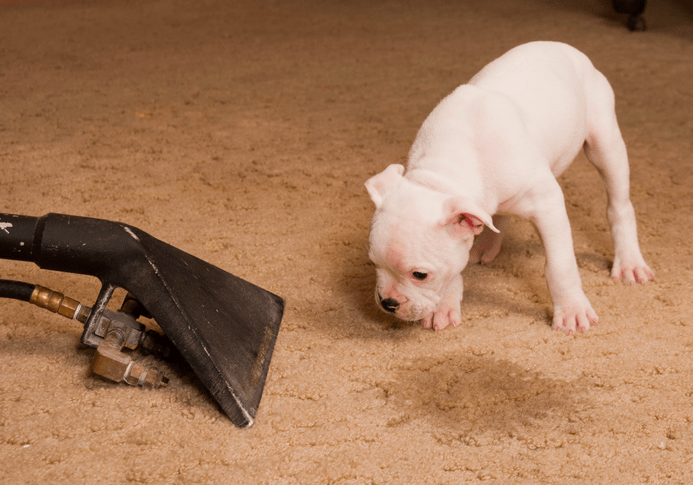 pet stain and pet odor removal meet