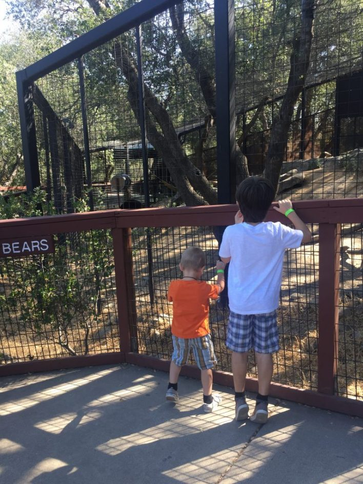 two boys facing an outdoor bear cage