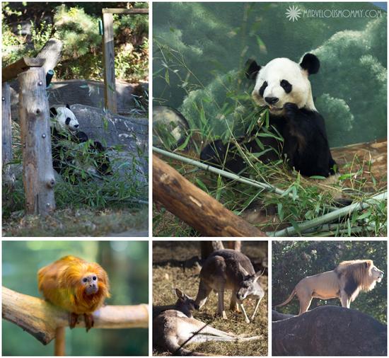 Zoo Atlanta_pictures
