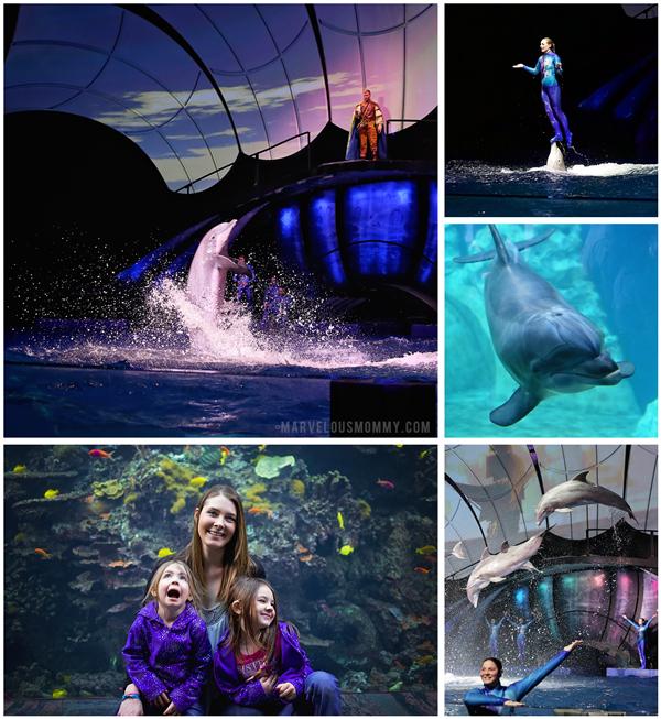 GA-Aquarium-Dolphin-Show