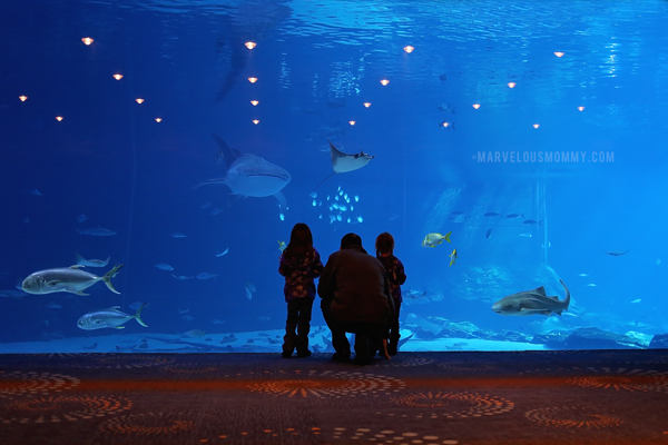 Georgia Aquarium 2015