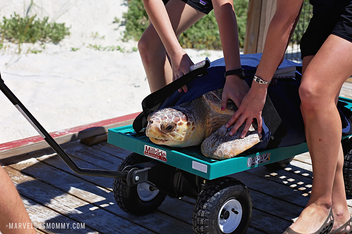 Sea Turtle _ Gulf World
